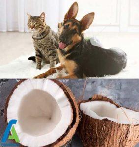 2 فواید روغن نارگیل برای حیوانات خانگی