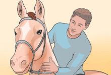 Photo of چگونه اسب وحشی را رام کنیم؟