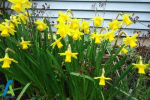 21 گل های ایمن برای افراد آلرژیک
