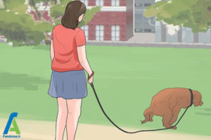 15 تربیت و نگهداری از سگ کوکر اسپانیل