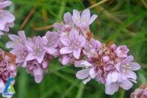 22 گل های ایمن برای افراد آلرژیک