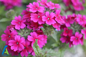 23 گل های ایمن برای افراد آلرژیک