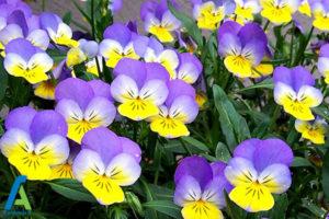 24 گل های ایمن برای افراد آلرژیک