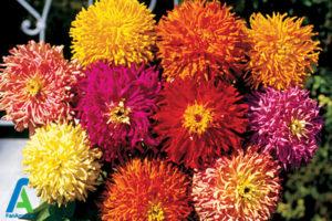 25 گل های ایمن برای افراد آلرژیک