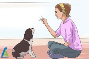 17 تربیت و نگهداری از سگ کوکر اسپانیل