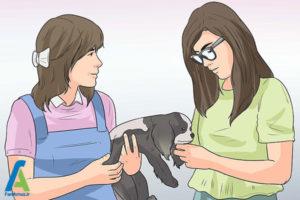 19 تربیت و نگهداری از سگ کوکر اسپانیل