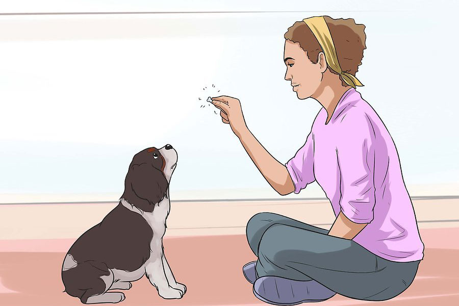 20 تربیت و نگهداری از سگ کوکر اسپانیل