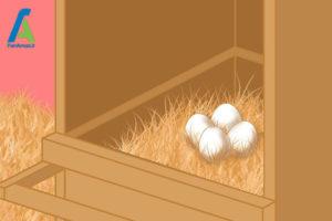 1 مرغ و تخم مرغ