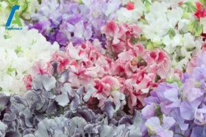 3 تاثیر انواع بو در سطح هورمون