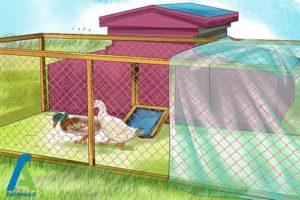 3 مراقبت از اردک ها در فصل زمستان
