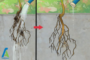 3 تکثیر گل فلوکس