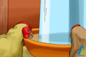 3 جلوگیری از بروز بیماری مرغ ها