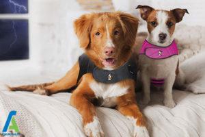 2 کاهش استرس و اضطراب سگ