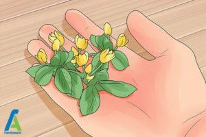 3 شینیون مو با گل طبیعی