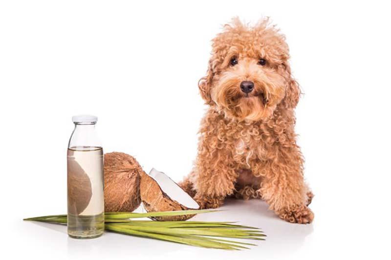 3 فواید روغن نارگیل برای حیوانات خانگی