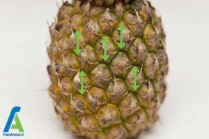 3 نحوه انتخاب و نگهداری طولانی آناناس