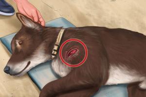 3 بیماریهای سگ