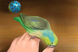 3 آموزش طوطی