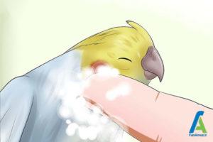 2 حمام کردن پرندگان خانگی