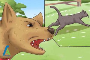 4 دور کردن گربه از خانه
