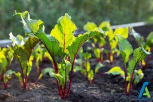 4 افزایش باردهی سبزیجات
