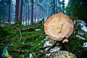 4 معرفی انواع چوبی که نباید بسوزانیم