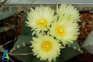 4 گل های ایمن برای افراد آلرژیک