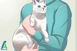 4 اصول صحیح بغل کردن و حمل گربه