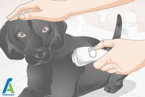 3 نحوه تیمار کردن سگ خانگی