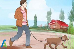 3 تربیت و نگهداری از سگ کوکر اسپانیل