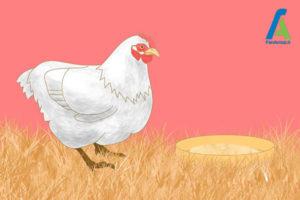 3 مرغ و تخم مرغ