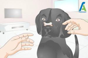 4 آموزش سگ برای نگهداشتن استخوان