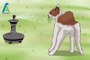 5 دور کردن گربه از خانه