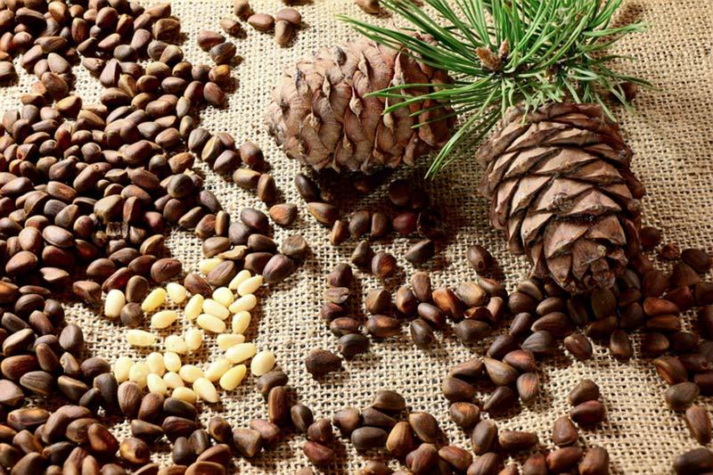5 برشته کردن دانه کاج