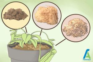 3 گیاه گوشتخوار نپنتس