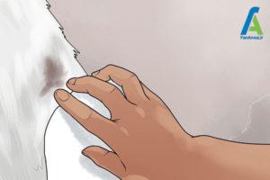 3 شستن و مراقبت از خز