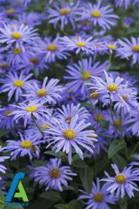 5 معرفی گل های تابستانی