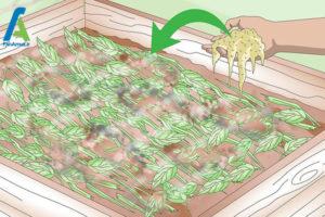 5 تقویت خاک یا کمپوست