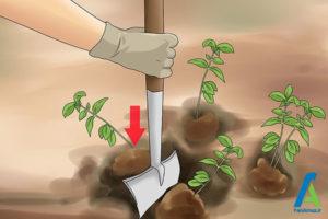 5 تکثیر گل فلوکس