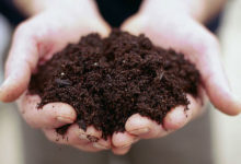 Photo of چگونه خودمان مناسب بودن خاک را جهت پرورش گل و گیاه بسنجیم؟