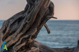 5 معرفی انواع چوبی که نباید بسوزانیم