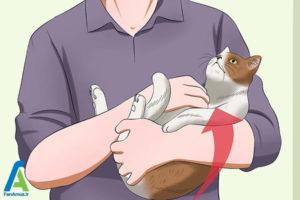 5 اصول صحیح بغل کردن و حمل گربه