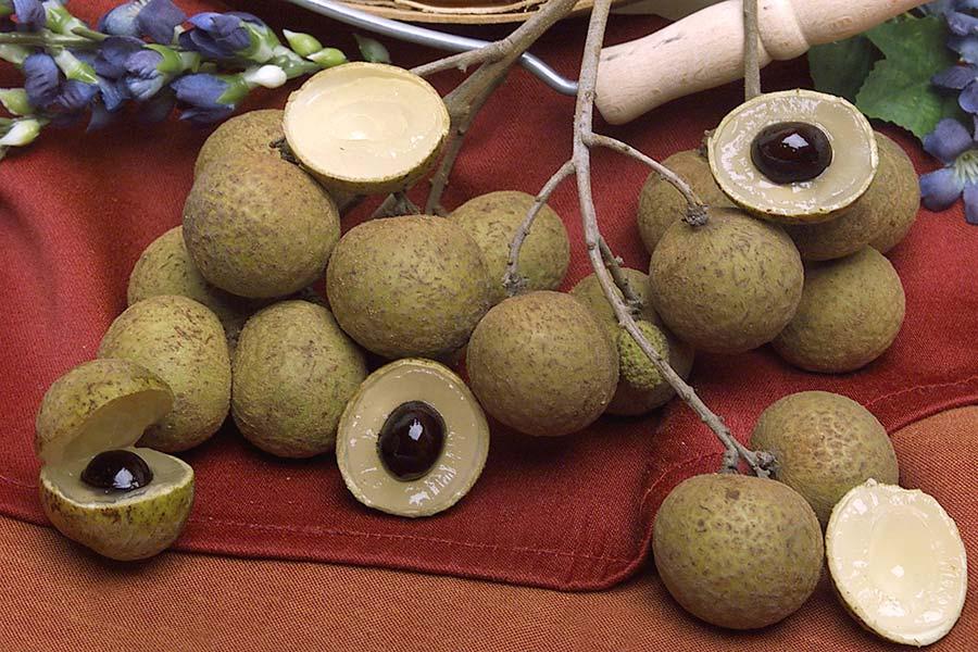 4 خواص و فواید میوه چشالو