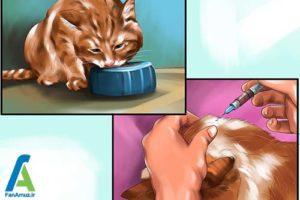 5 تزریق انسولین به گربه خانگی