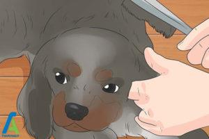 4 تربیت و نگهداری از سگ کوکر اسپانیل