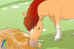 2 نحوه نگهداری از اسب مینیاتوری