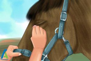 4 درمان بیماری چشمی اسب