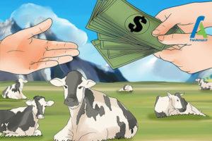 2 احداث مزرعه پرورش گاو