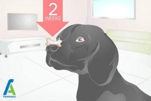 5 آموزش سگ برای نگهداشتن استخوان