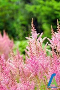 6 معرفی گل های تابستانی